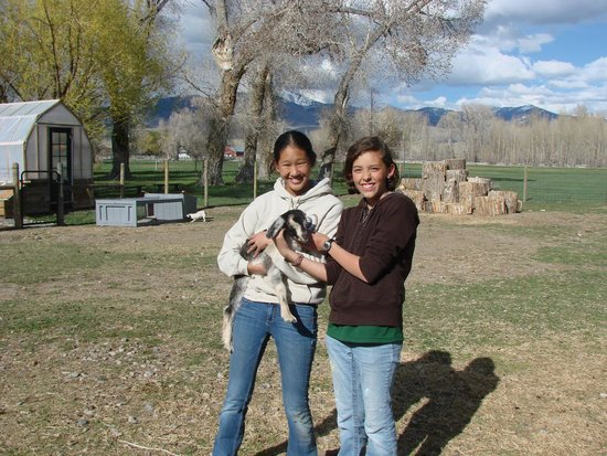 High Tower Ranch Bed, Breakfast & Farm Stay: Our kids playing with the baby goats