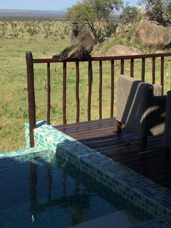 Four Seasons Safari Lodge Serengeti: Baboon on our veranda!