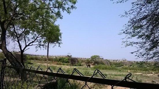 Nehru Zoological Park: Elephant