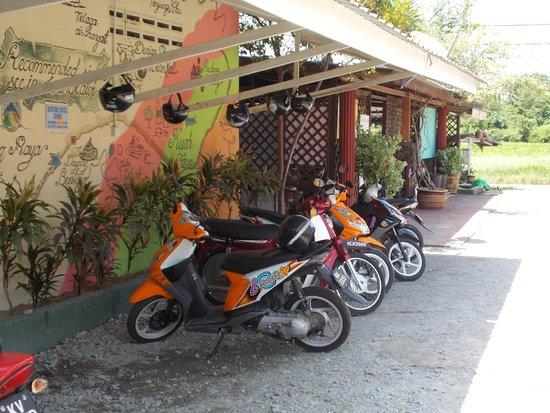 Rainbow Lodge: i rent a motorbike its cheap ...