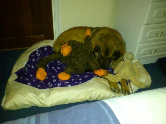 Shirelodge Bed & Breakfast: Sahara, making herself at home