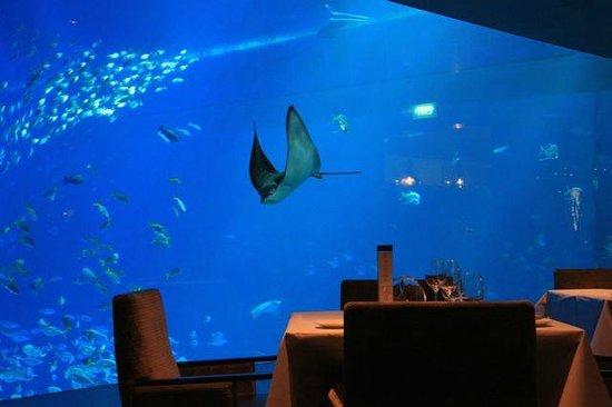 Ocean Restaurant by Chef Cat Cora: Hi Stingray