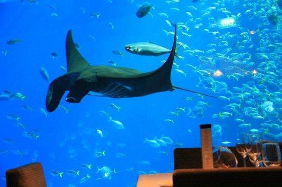 Ocean Restaurant by Chef Cat Cora: Hi Manta Ray