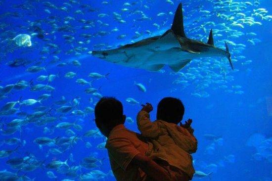 Ocean Restaurant by Chef Cat Cora: Hi Shark