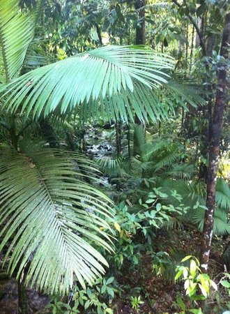 Down Under Tours - Day Tours : Mossman Gorge