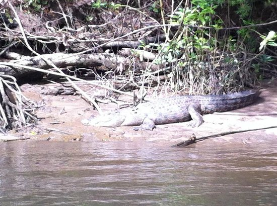 Down Under Tours - Day Tours : Crocodile river cruise