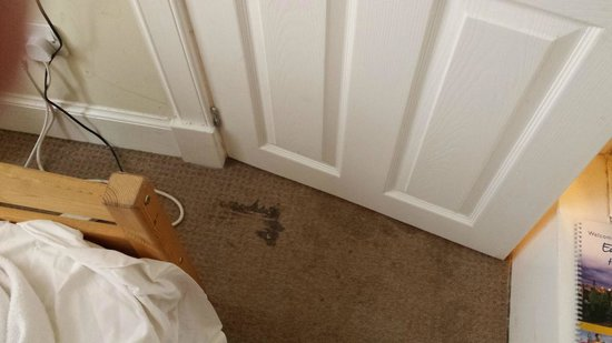 The Mayville Guest House: More filthy carpets