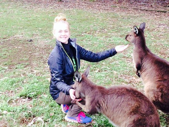 Kangaroo Island Wildlife Park: Feeding Kangaroos