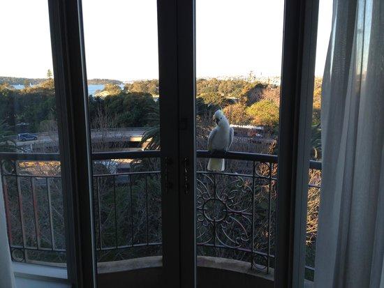 Sir Stamford at Circular Quay Hotel Sydney: Juliet balcony