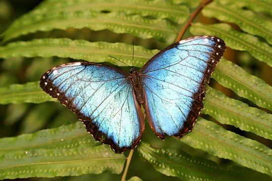 Benalmadena Butterfly Park-Mariposario: fotografía de Mariposario de Benalmád...