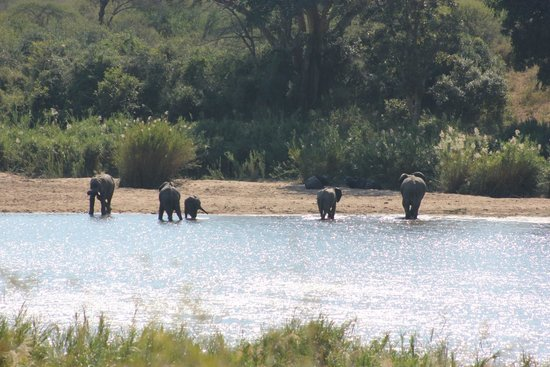 Lower Sabie Restcamp: Elephant in Sabie River
