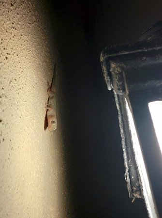 The Frangipani Langkawi Resort & Spa : Милые геккончики по вечерам, по стенам номера