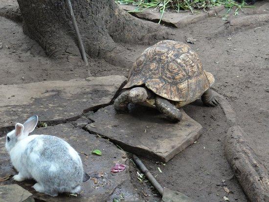 Pinewood Beach Resort & Spa: Tortoise & Hare