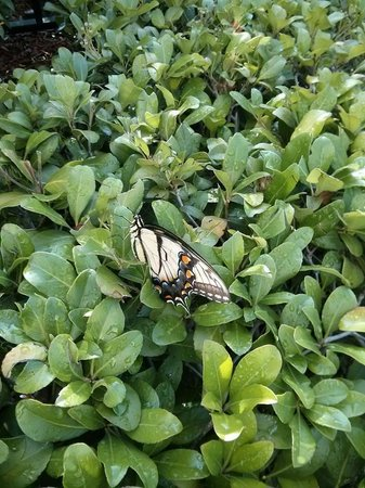 Hilton Orlando: Butterfly friendly planting