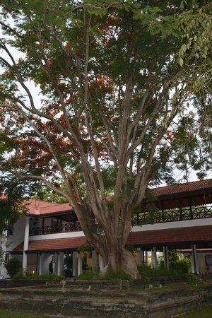 Cinnamon Lodge Habarana : Hotel ground