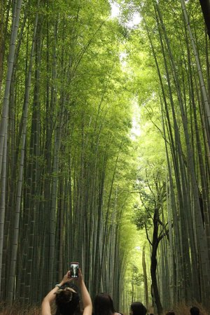 Sagano: Take a deep breath in the Bamboo Forest....Ahhhhh