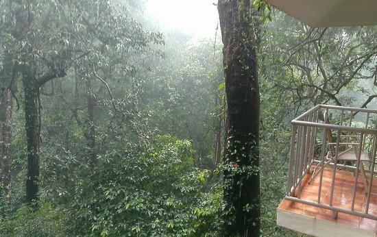 Vagamon Heights: Thankakanam Estate: View from woodpecker balcony