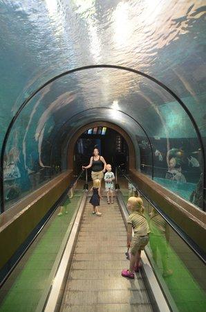 Phuket Aquarium : tunellen
