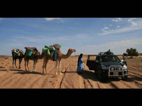 Riad Dar Anika : Camel rides