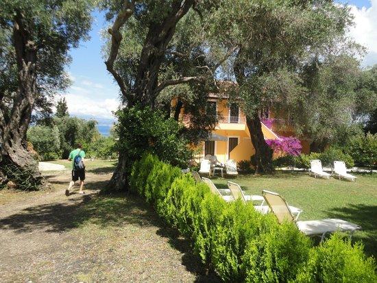the garden - Picture of Marilena Apartments & Studios, Dassia ...