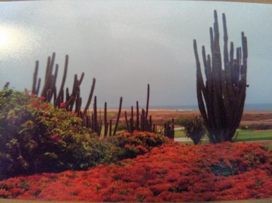 Tierra del Sol Resort & Golf: view at lunch, flowers,cactus,golf course,ocean and good food