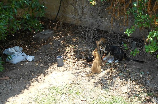 Best Sabinal: Feeding The Cats