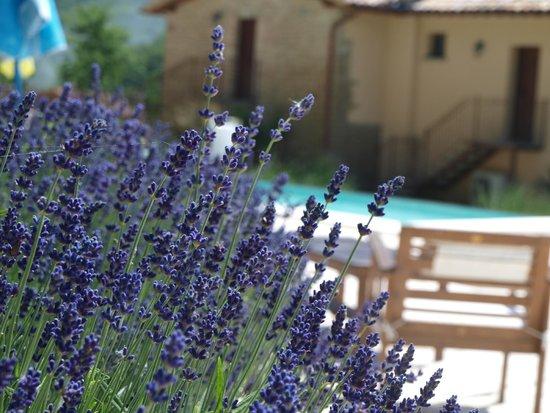 Agriturismo Ca Montioni: piscina