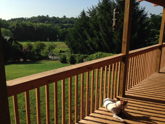 Barkwells, The Dog Lovers' Vacation Retreat: Fisher's deck-Jake taking a rare break from running.