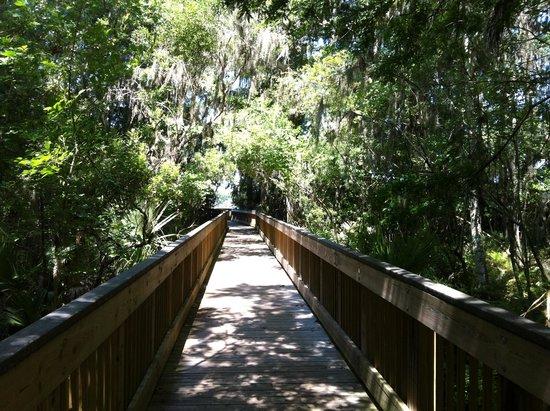 John Chesnut Sr. Park: The boardwalk of Peggy Park Trail