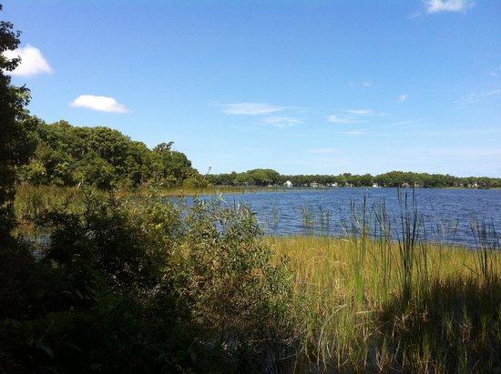 John Chesnut Sr. Park: Scenic Lake Tarpon from the Trail