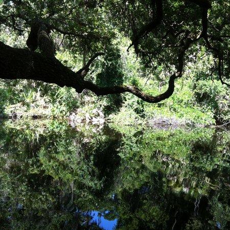 John Chesnut Sr. Park: Brooker Creek winds alongside the trail