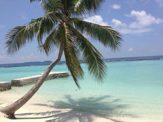 Kurumba Maldives : Male view