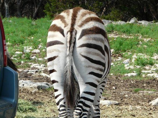 Natural Bridge Wildlife Ranch: Heads and butts