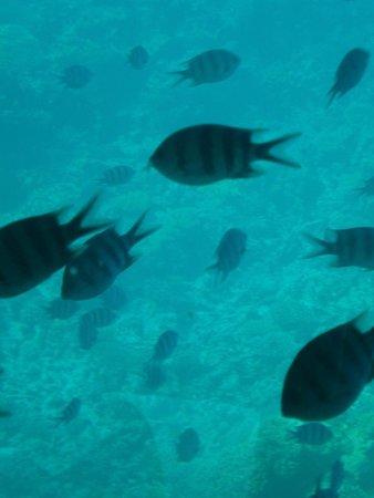 MinaMark Beach Resort : рыбки в красном море