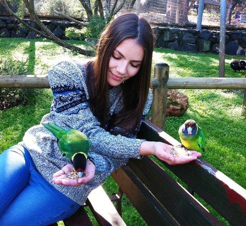 Bunbury Wildlife Park: With the 28 parrots