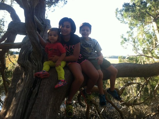 Skidaway Island State Park : Found this tree that looks over the marsh! Perfect for climbing