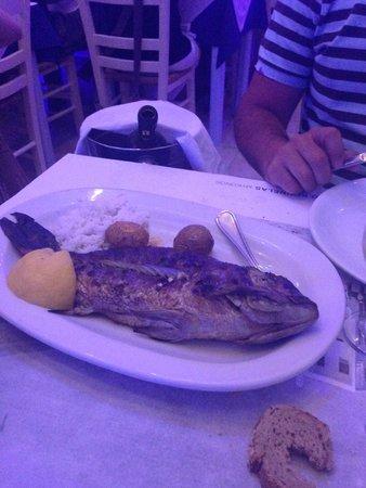 Kounelas Fish Tavern: Dentice