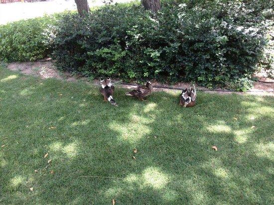 Jumeirah Creekside Hotel: Garden duck