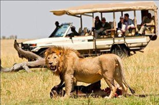 Mara Bushtops: open game drive vehicles