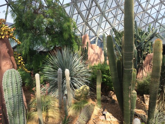 Mitchell Park Horticultural Conservatory (The Domes): Desert Dome