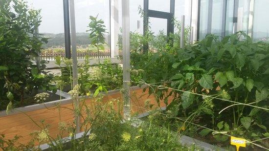 Azurmendi Gastronomico: Greenhouse 2