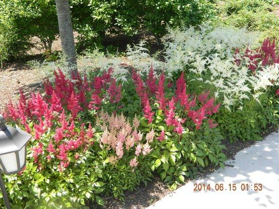 Dolce Stockton Seaview Hotel & Golf Club: floral garden