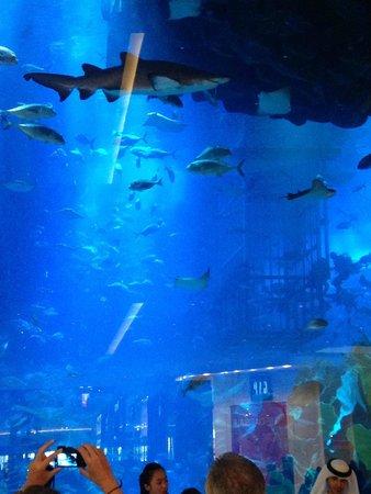 The Dubai Mall : aquário