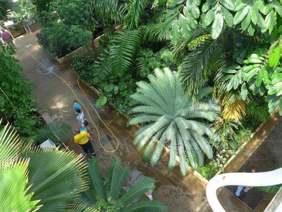 Royal Botanic Gardens Kew: Palm House Balcony