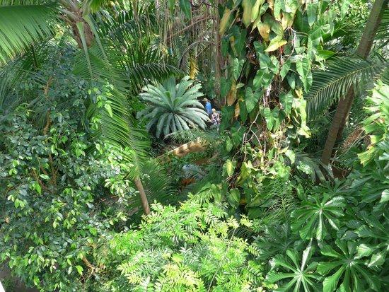 Royal Botanic Gardens Kew: from Palm House balcony
