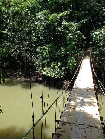 Hotel Las Caletas Lodge: Wanderung nach Drake Bay
