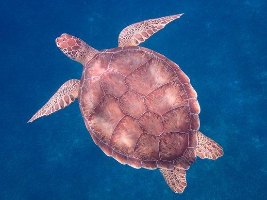 Captain Alan's Three Island Snorkeling Adventure: Sea Turtle