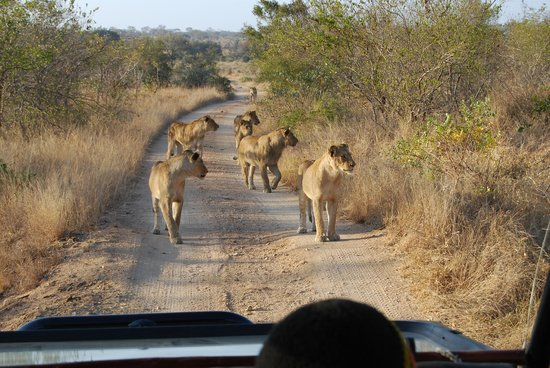 Hamiltons Tented Safari Camp : wildlife