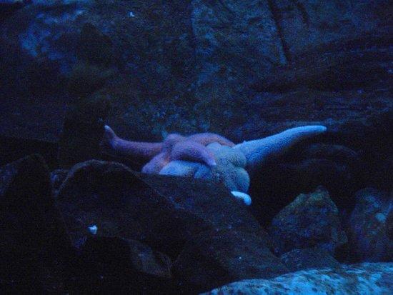 Aquarium du Quebec : etoile
