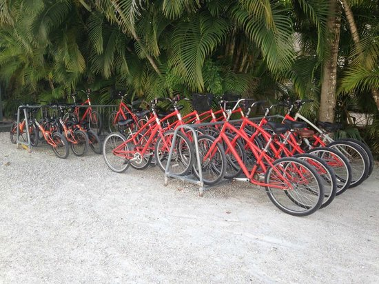 Sunset Beach Inn: Couldn't help re-arranging the bikes. Happily OCD!